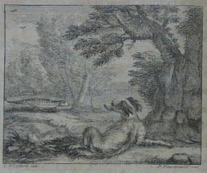 Image Spaniel